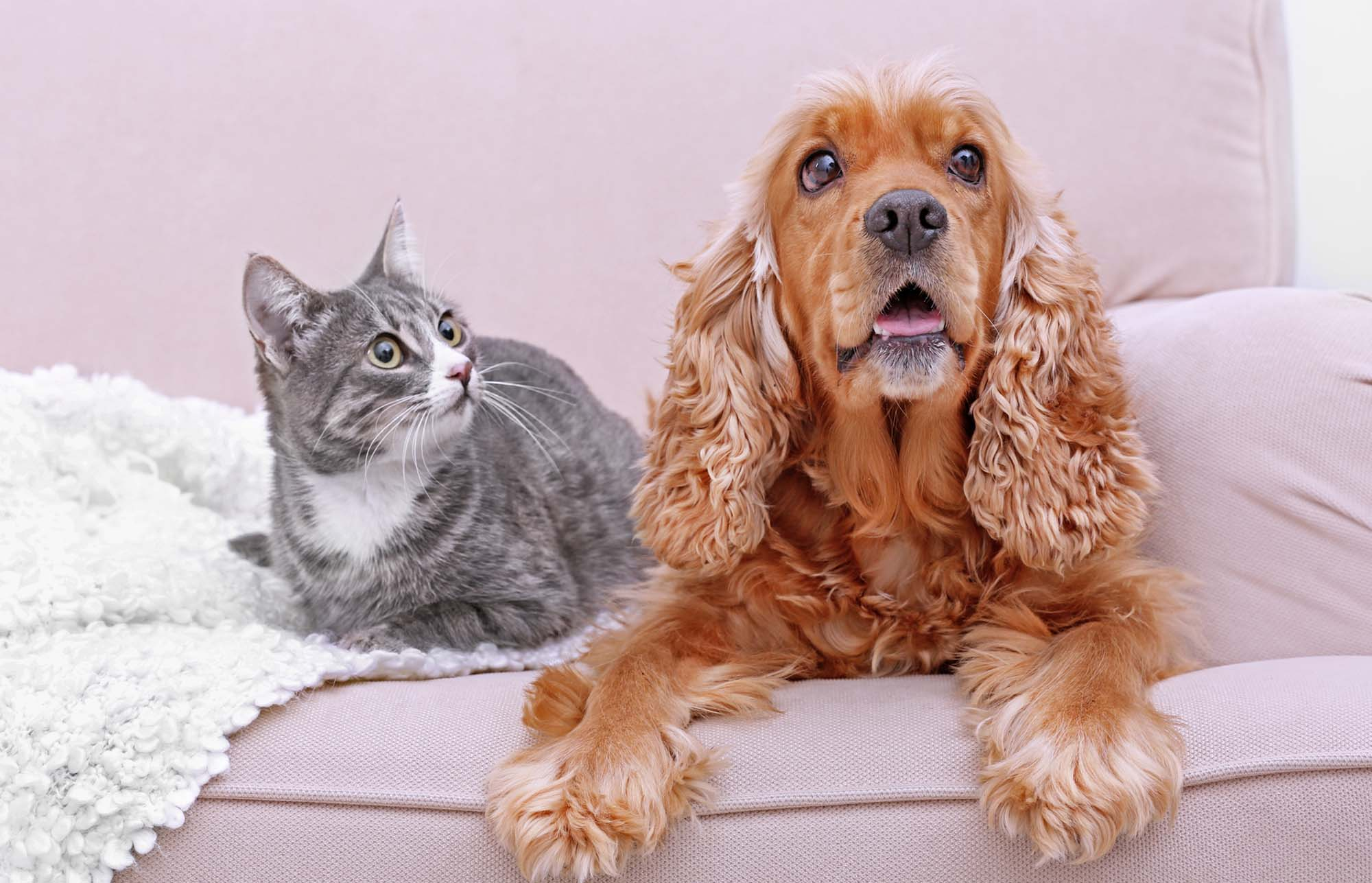 Pet Sitter in Woking Cute dog and cat together on couch at home